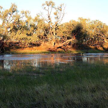 Early morning Camooweal Billabong Queensland by KazM
