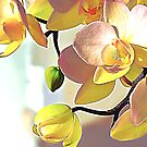 Orchids by TinaGraphics