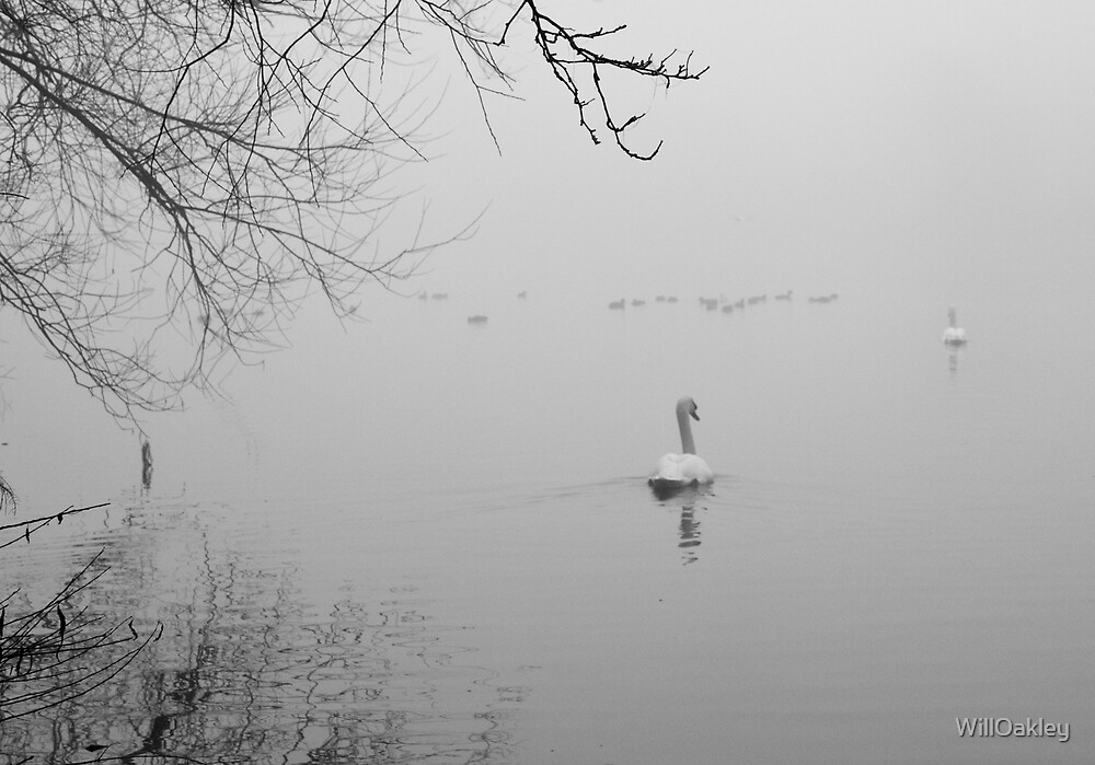 Swan Lake in the Fog by WillOakley