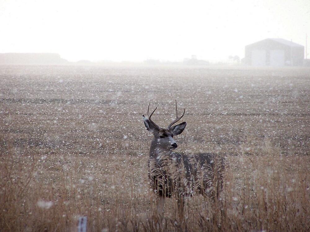 Mule Deer Buck In Snowstorm by postmsterjim0