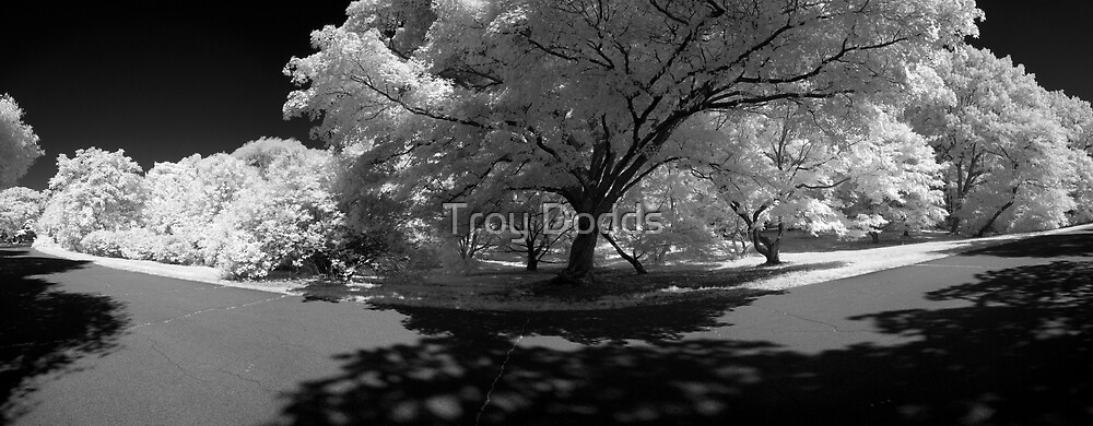 Arnold Arboretum by Troy Dodds