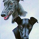 Greyhounds by Penny Edwardes