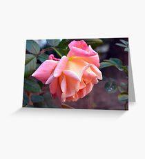 Pink orange rose in the garden Greeting Card