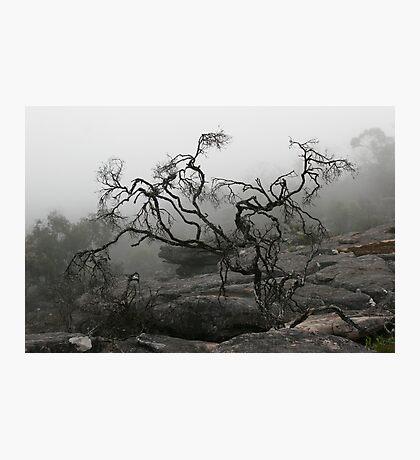 Rock Tree Photographic Print