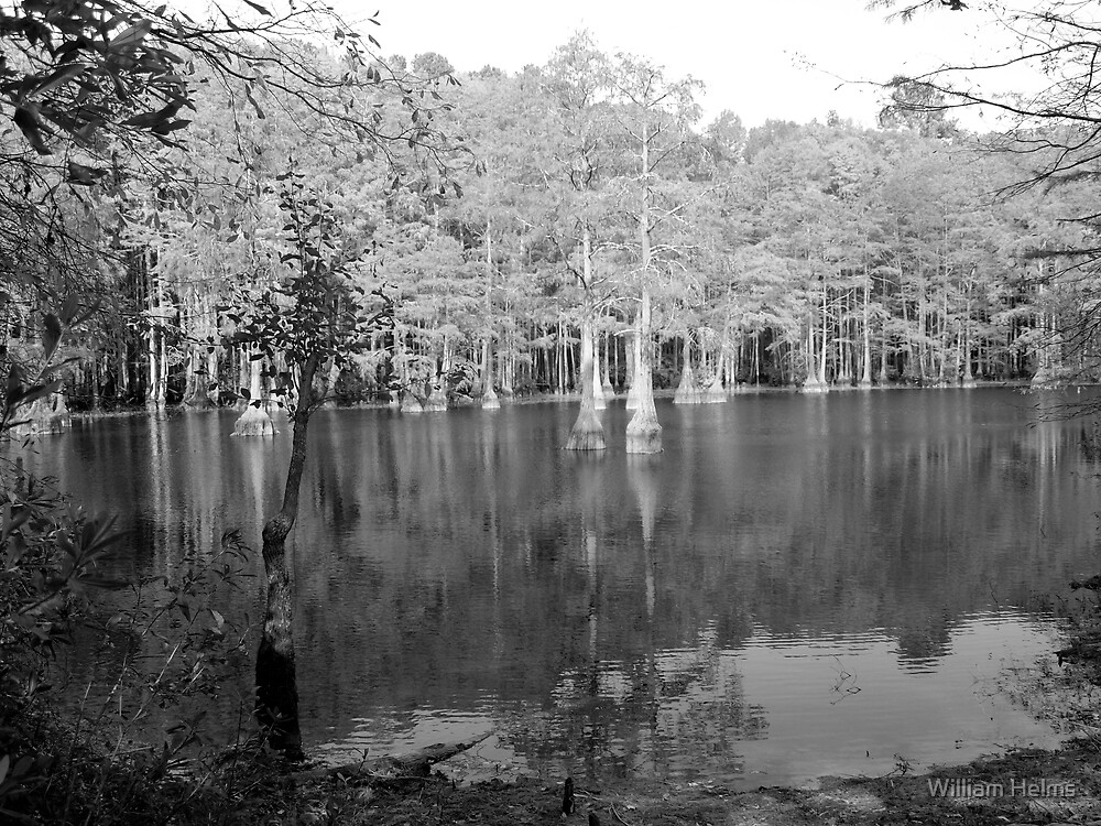 Tree in Water by William Helms