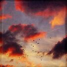 evening clouds and birds by Dirk Wuestenhagen