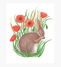 shy bunny among poppies Photographic Print