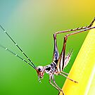 Grasshopper by ~ Fir Mamat ~