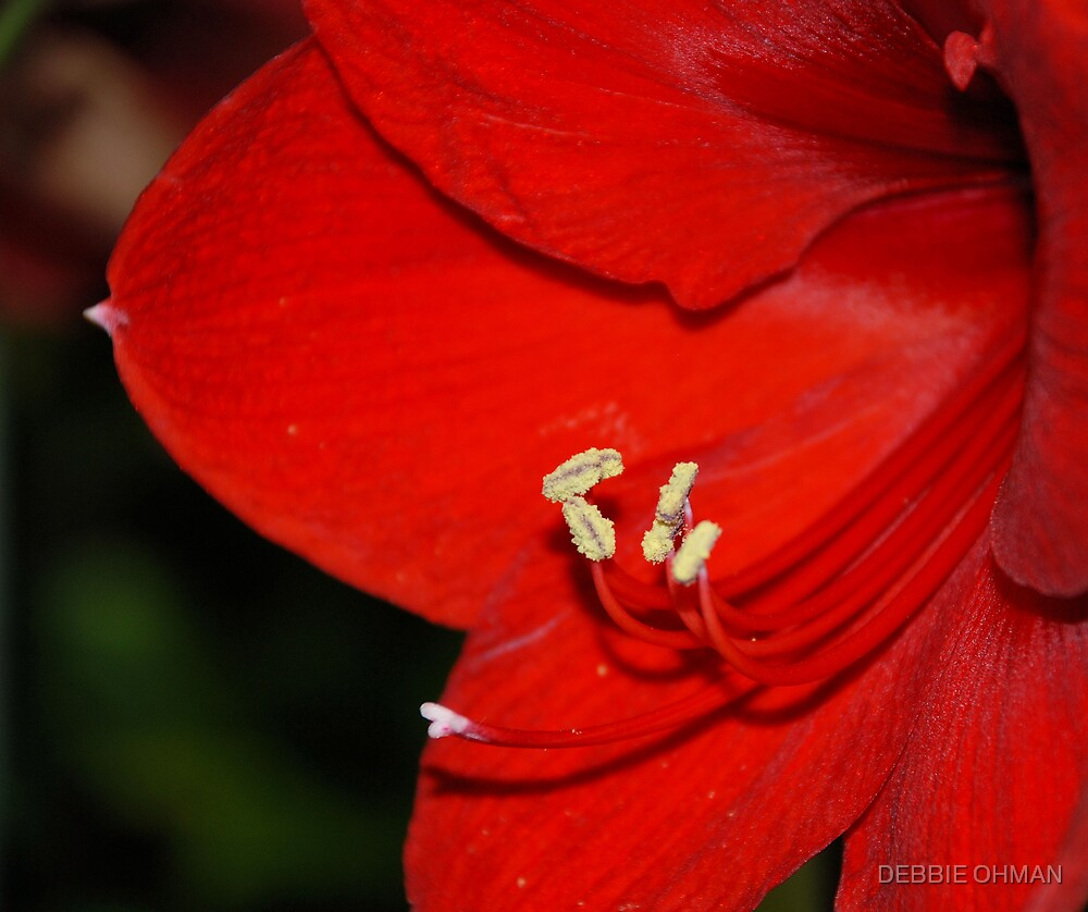 Red Satin by DEBBIE OHMAN