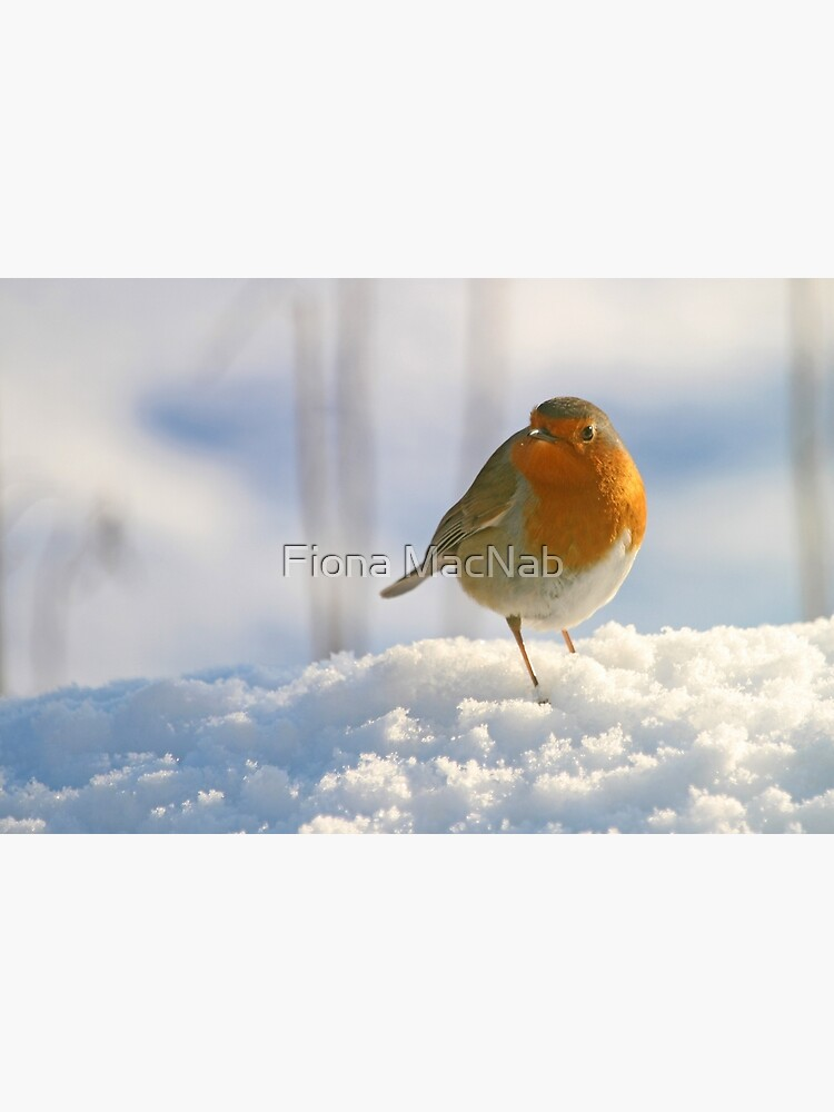 Winter robin by orcadia