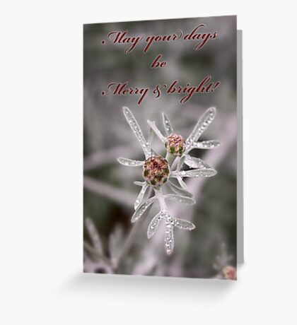 Ruby buds on silver - card Greeting Card