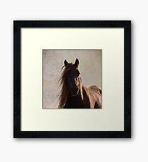 Sunlit fell pony Framed Print