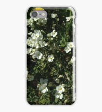 Pure White Aubretia iPhone Case/Skin