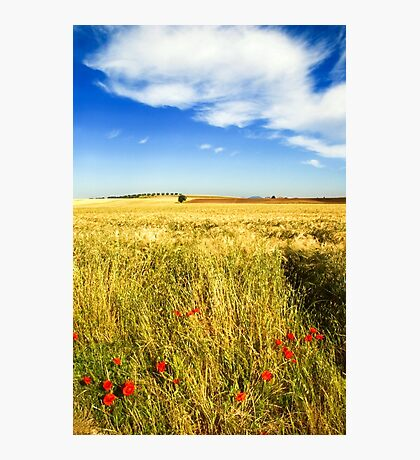 Poppies and cloud Photographic Print
