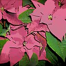 Comic Abstract Poinsetta Plant by steelwidow