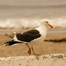 Walking Seagull by Buckwhite