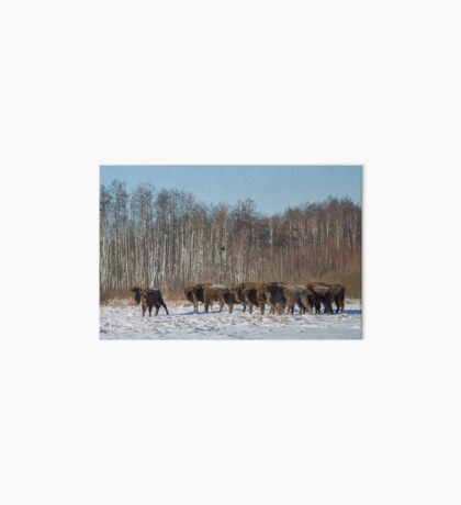 Bison Herd Art Board