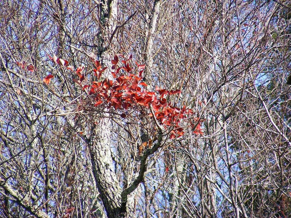red fall by rebecca smith
