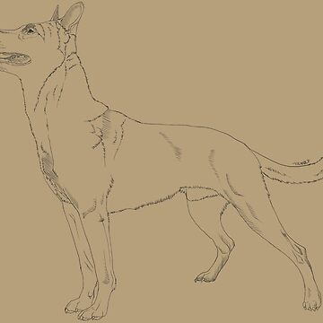 Belgian Malinois - Standard by tiewolf