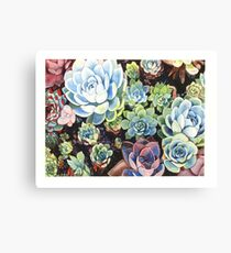 Succulent Field (watercolor) Canvas Print