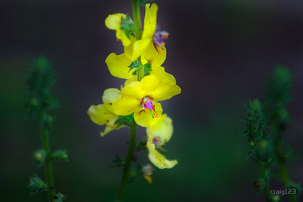little yellow flower by craig123