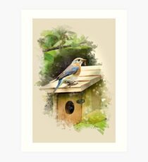 Eastern Bluebird Watercolor Art Print