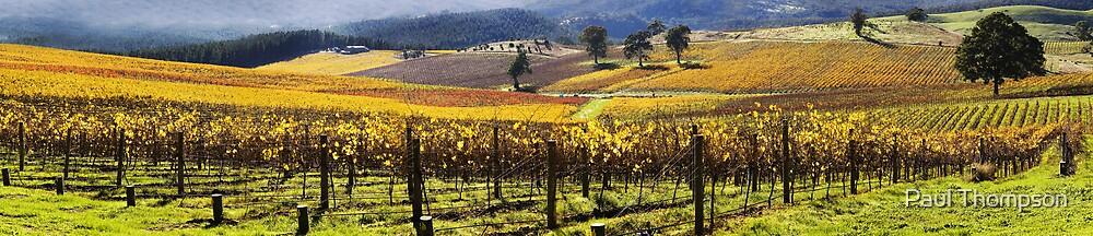 Summer Wine panorama by Paul Thompson