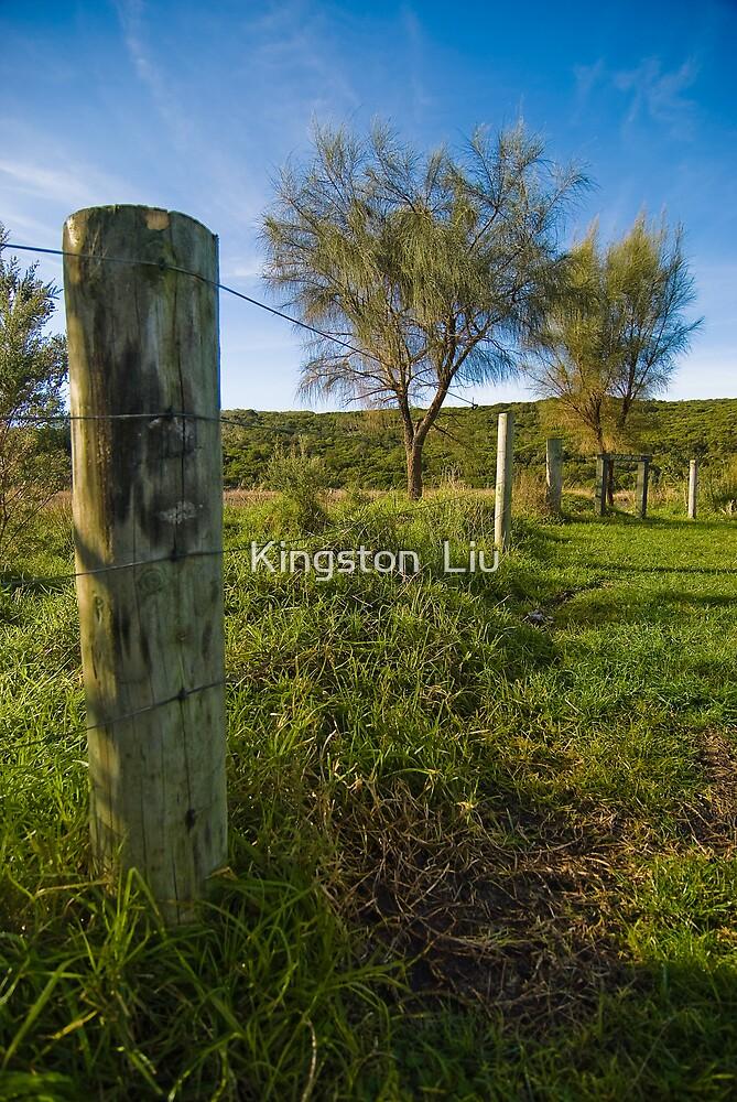 Fence & Tree by Kingston  Liu