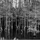 Cypress Grove by wolftinz