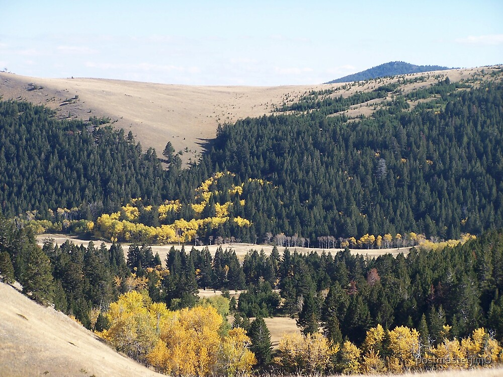 Fall Colors In Montana by postmasterjim0