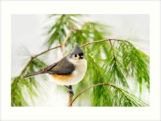 Winter Pine Bird by Christina Rollo