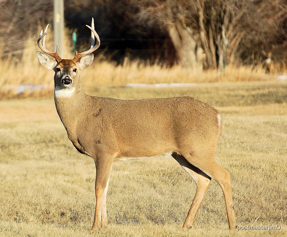 Whitetail Buck by postmasterjim0