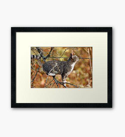 Don't Fly Away, Birdie! Framed Print