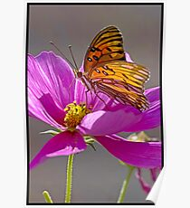 Gulf Fritillary Butterfly. Poster