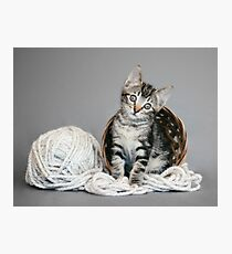 Yarn Tabby Photographic Print