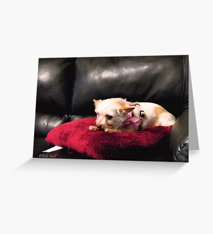 """""""Queen of the Couch""""... prints and products Greeting Card"""