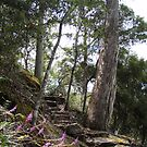 track upwards to the Falls at Wilmot by gaylene