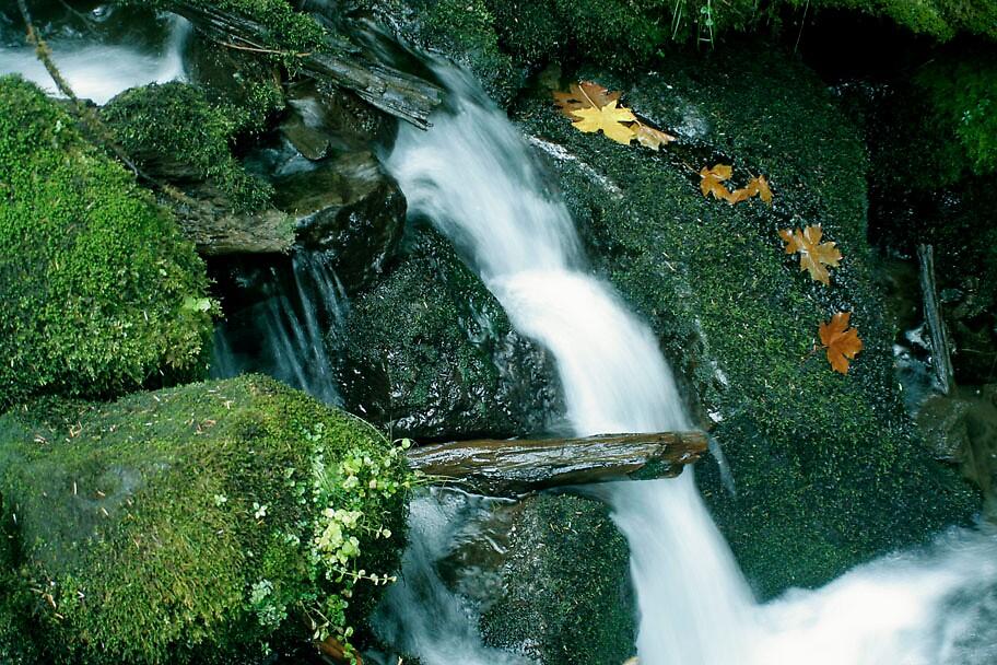 Fall In the Oregon Cascades by JUSTINBOYD