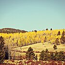 Aspens In The Fall  by ameliakayphotog