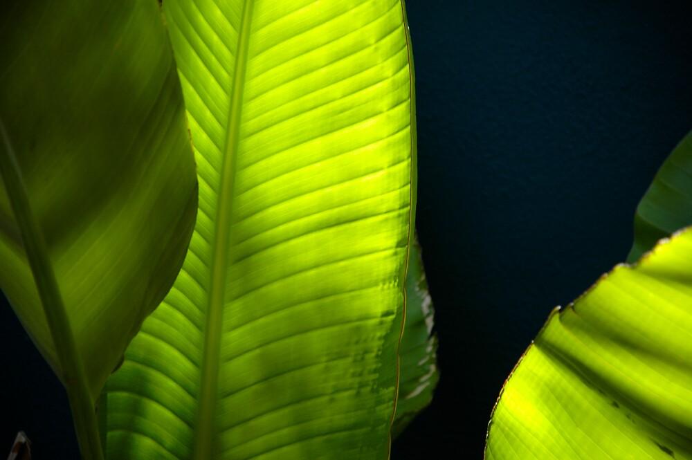Praradise green by Roslyn Slater