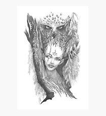 Willow Photographic Print