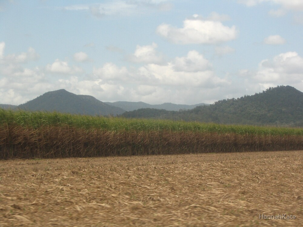 Sugarcane fields by HannahKate