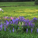 Grazing In A Lupine Dream by Wayne King
