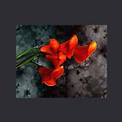 Orange Calla Lilies on Gray by LaRoach