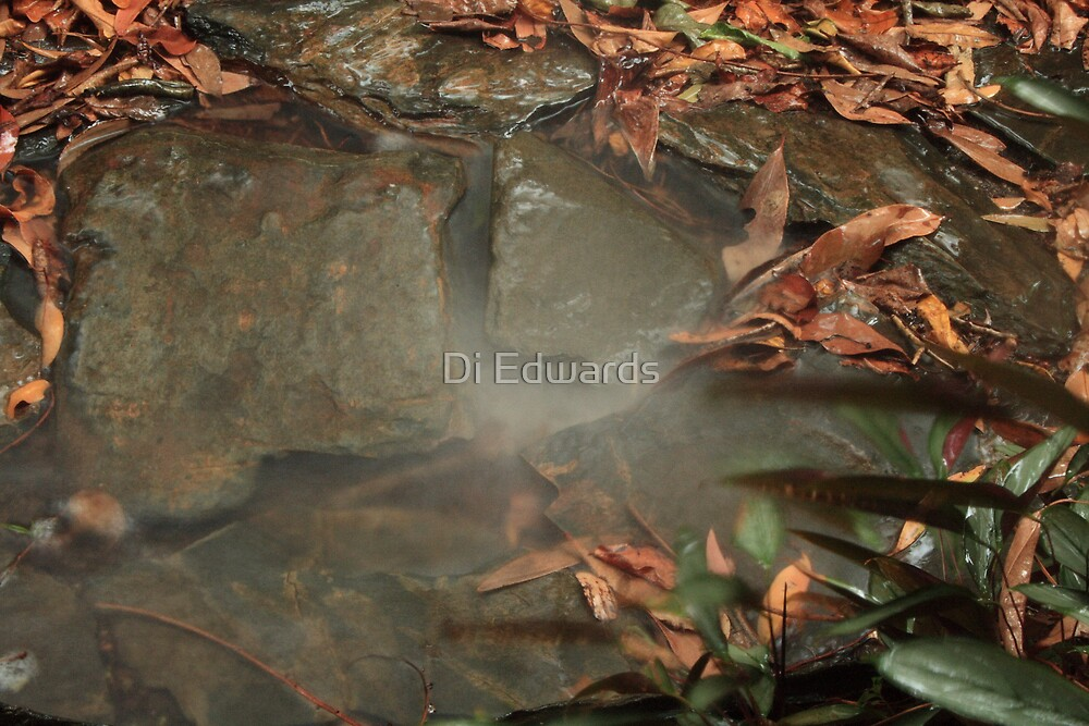 Misty Fall by Di Edwards