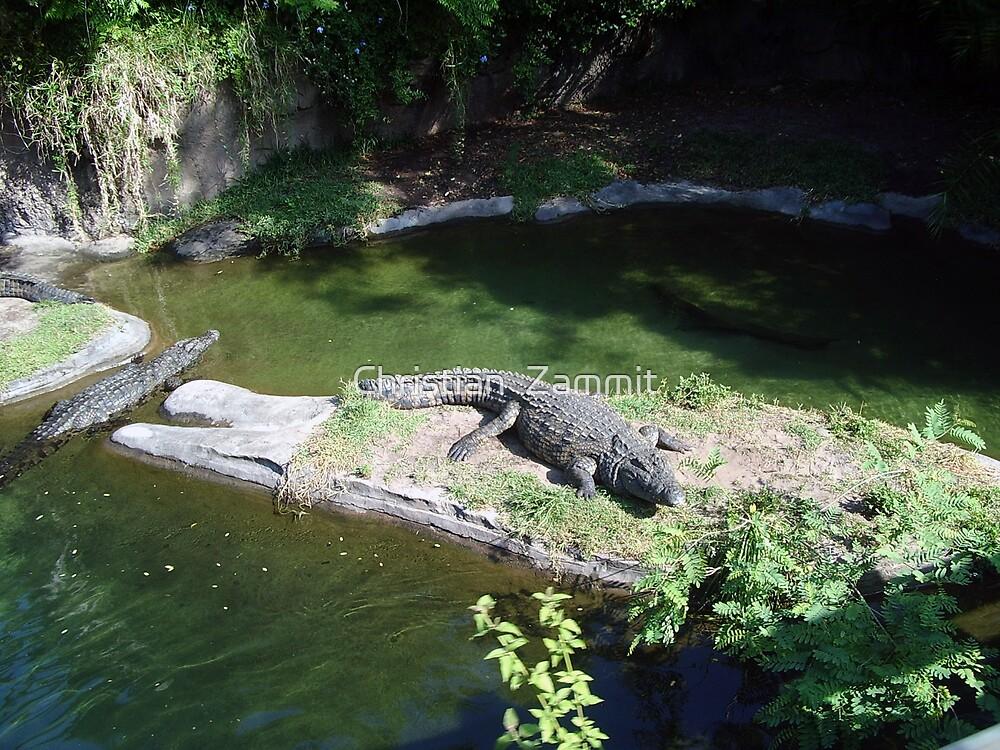 Hungry crocodiles by Christian  Zammit