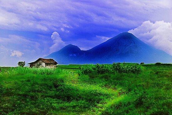 Tropical Barn by Antoine Dagobert
