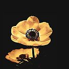 Anemone Flower by TinaGraphics