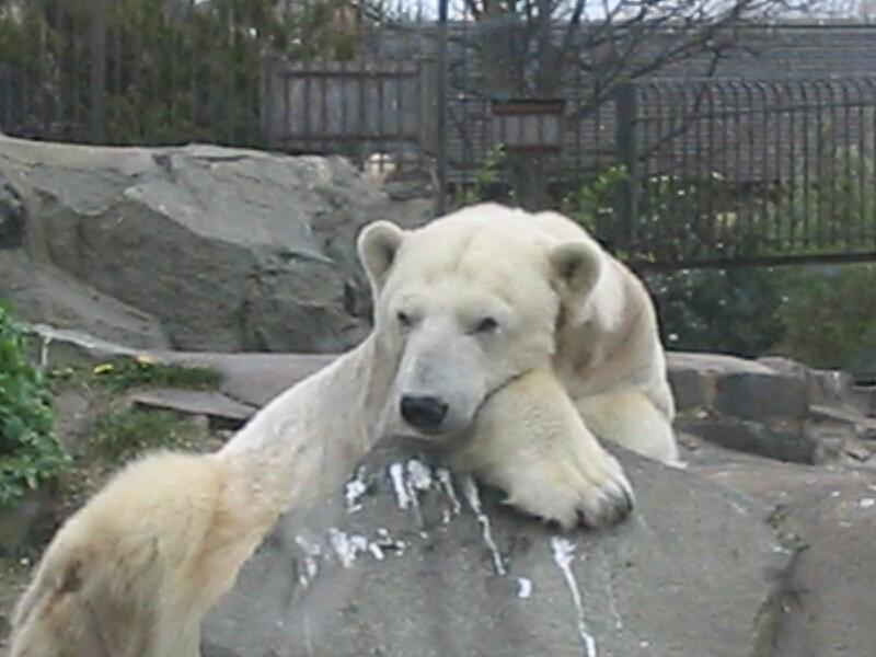 Polar Bear by panicatthetesco