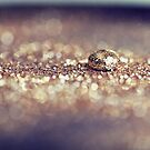 Gold Drop by ameliakayphotog
